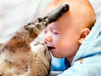 Ребята и котята. Микс для поднятия настроения.
