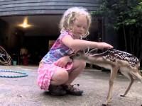 Встреча девочки с оленёнком