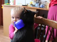 Маленькой девочке очень понравился кот. Очень-очень мило!