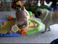 Общение малыша и собаки