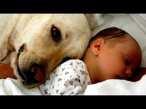 Эти животные впервые знакомятся с детьми своих хозяев. Это невероятно мило!