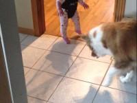 Пёс учит малышку прыгать