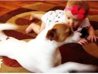 Смотрите как собачка учит малышку ползать