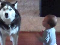 Собака пытается повторить все слова малыша