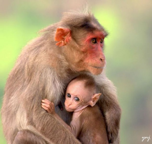животные мамы 11