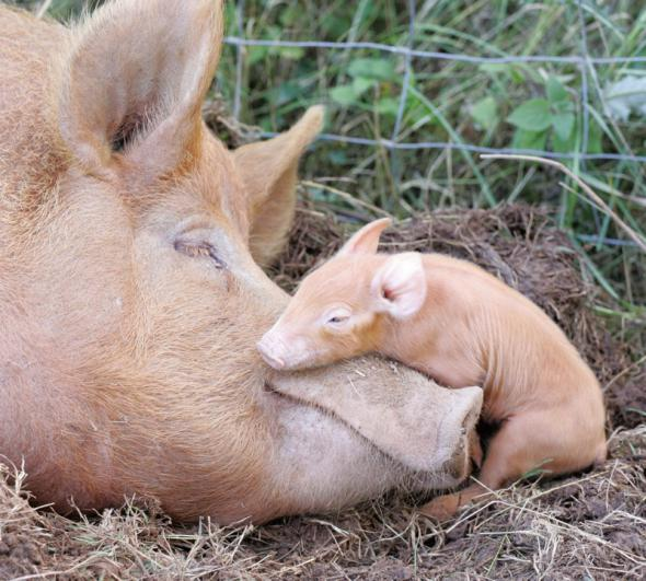 животные мамы 20
