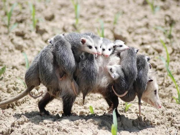 животные мамы 5