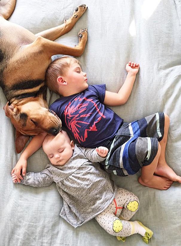 брат сестра и собака