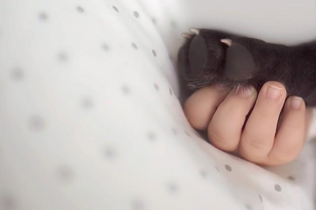 бульдог и мальчик родились в один день