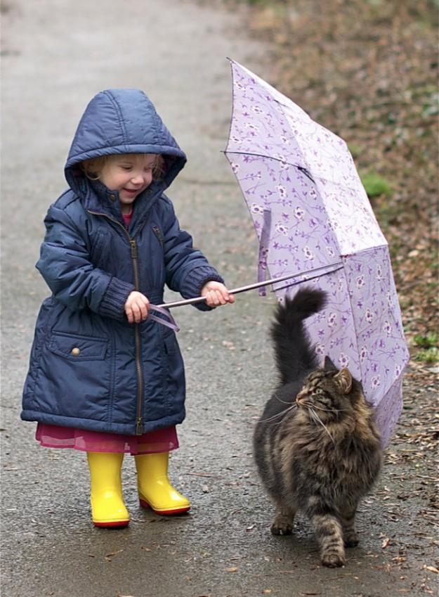 дети и котики