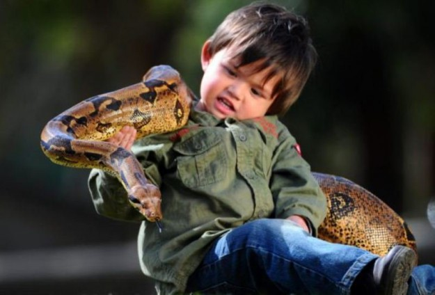 двухлетний мальчик и удав