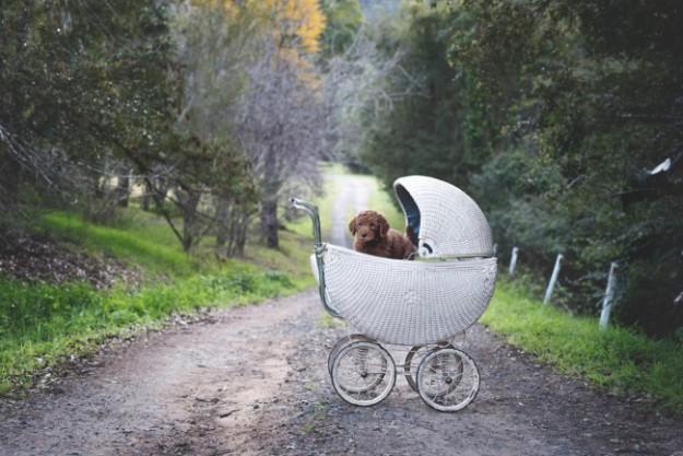 щенок вместо ребенка