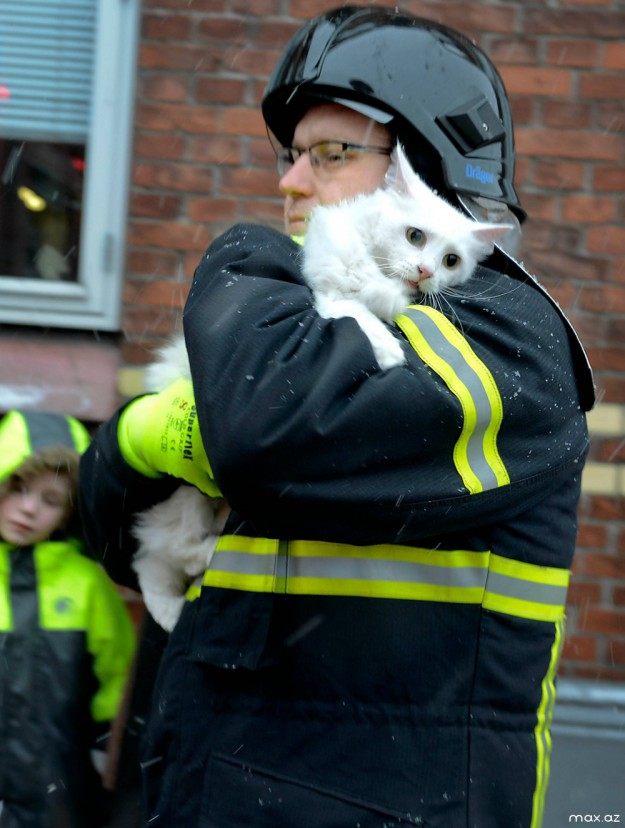 спас кота