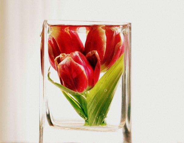 цветы круглый год4