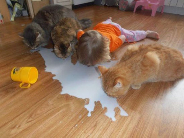 Хочу пить как котики!