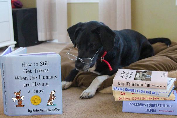 Пес ищет информацию о том, как вести себя, когда хозяева заводят детей