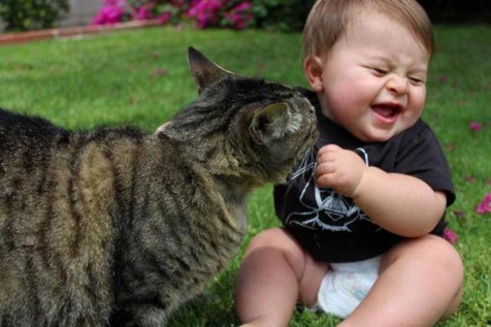 детки и котики