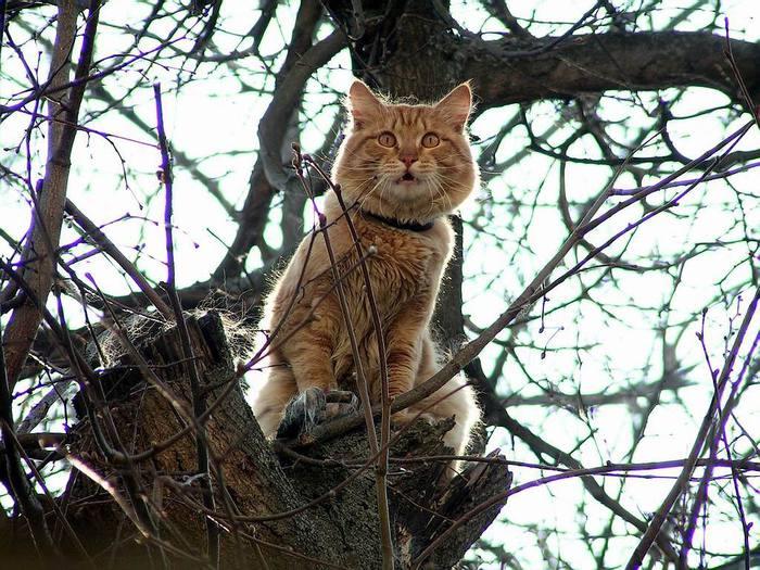коты на дереве