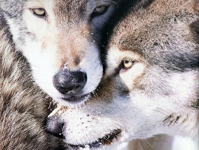 и зверя нет страшней чем человек