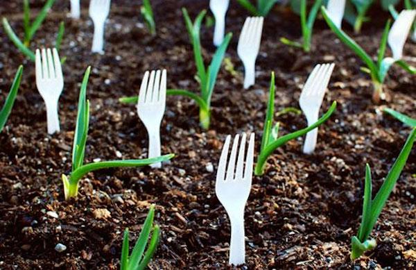выращиваем цветы в саду