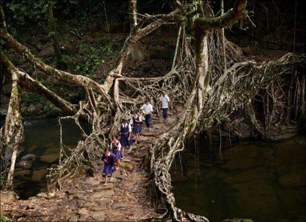 Индия, дети идут по живому мосту, сплетенному из корней деревьев