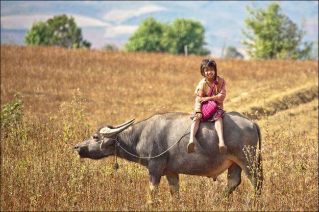 В Мьянмне дети ездят в школу на быках