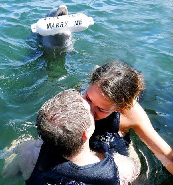Дельфин помог сделать это предложение
