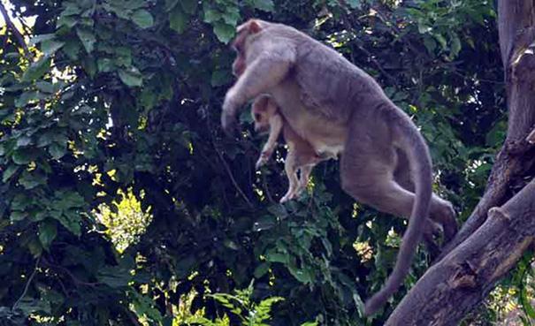 поступок обезьяны