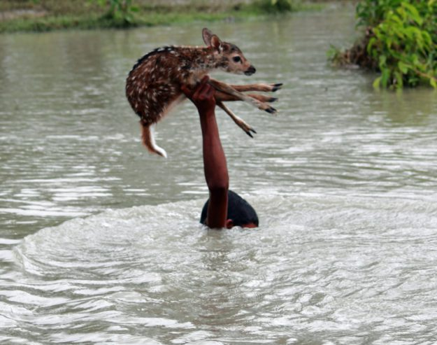 мальчик спас олененка