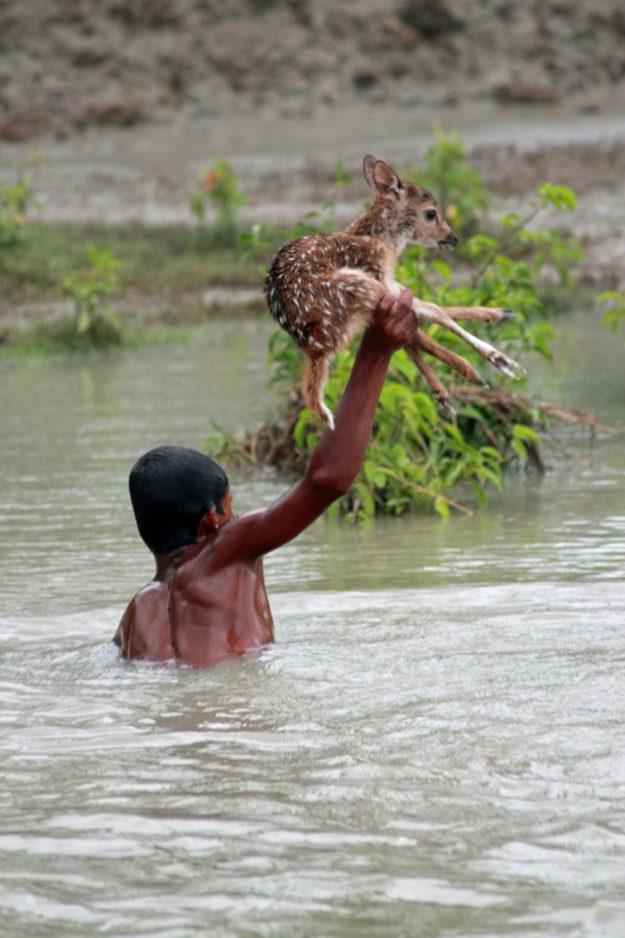 мальчик спас животное