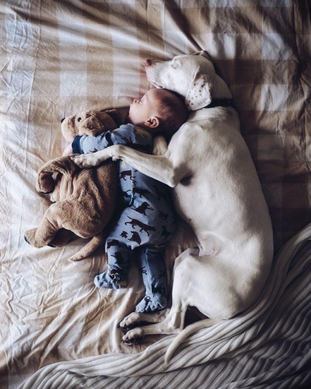 собака и малыш спят вместе