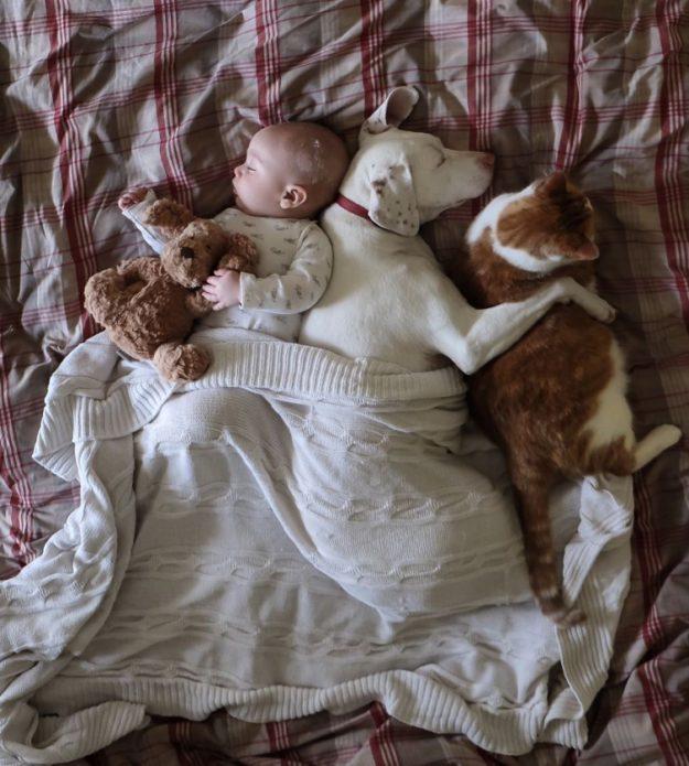 спящая парочка