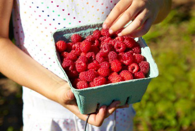 Пойдите в лес за ягодами и еще за кое-чем