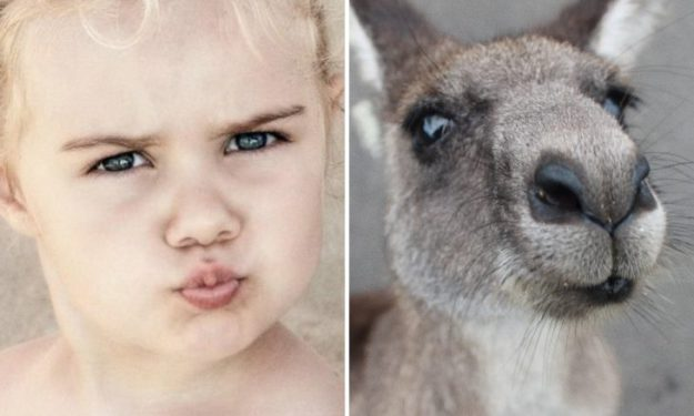 ребенок и кенгуру