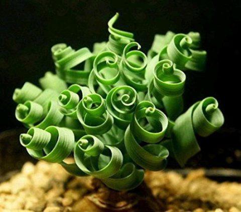 10 неизвестных комнатных растений, которые вы сейчас же захотите себе на окно