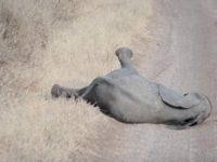 Слоненок начал капризничать посреди дороги, и слониха поступила очень мудро