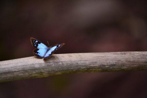 Урок бабочки. Притча о воспитании детей