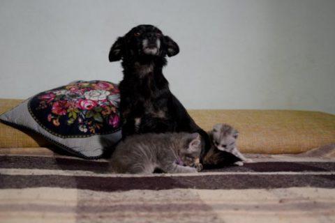 В Одессе добрая бездомная собака стала мамой для двоих котят