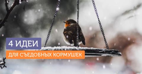 4 способа подкормить птиц зимой, не делая кормушку