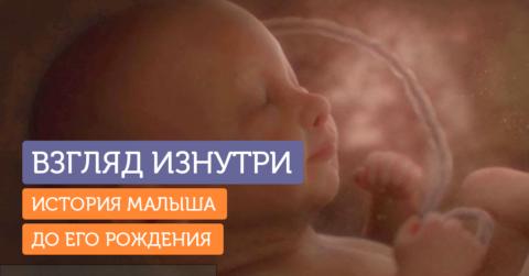 Удивительный короткометражный фильм о внутриутробной жизни малыша