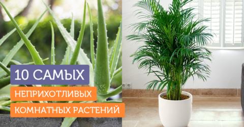 10 комнатных растений, которые не завянут у вас на подоконнике