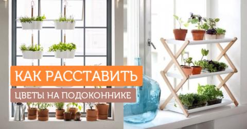 Сад на подоконнике: 10 идей для маленьких квартир