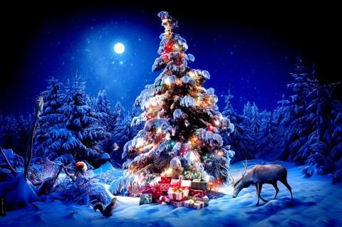Почему на Новый год принято наряжать елку?