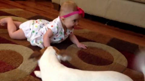 Собака учит малыша ползать. Так здорово!