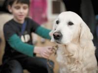 Собаки-терапевты помогают маленьким пациентам