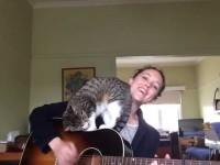 Без кота и песня не та