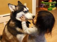 Малышка очень любит свою собаку хаски