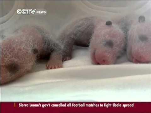 В зоопарке Китая произошло настоящее чудо!