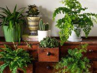 Как оригинально расставить дома комнатные растения