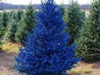 В этом году модно ставить дома цветные елки